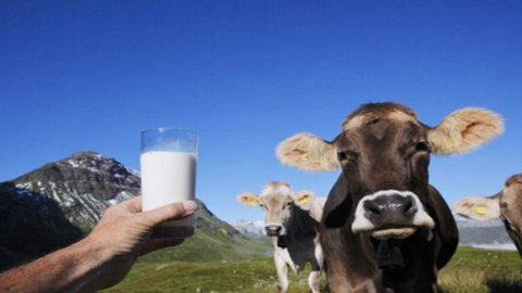 Quote latte, Italia indagata dall'Ue