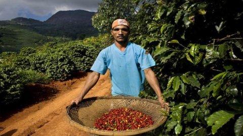 Brasile, cresce export verso l'Africa