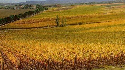 Coldiretti: l'anno che verrà porterà fortuna alla settore del vino