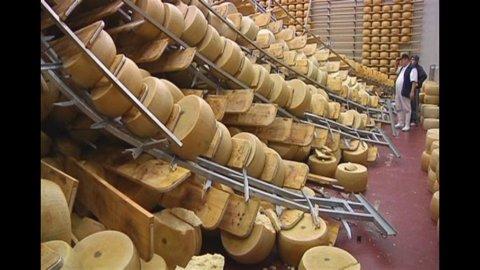 Diario del terremoto: dall'aceto balsamico al parmigiano, milioni di danni al made in Italy