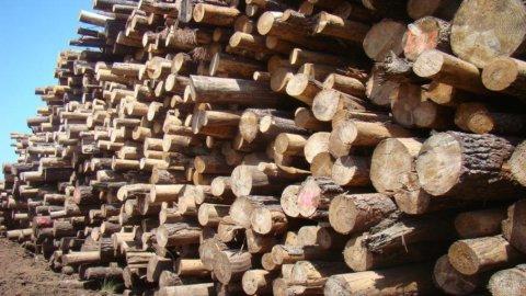 Terrae, 220 milioni per puntare sulla biomassa