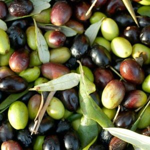 Cibo: nasce alleanza europea per proteggere vite, olivo e grano duro