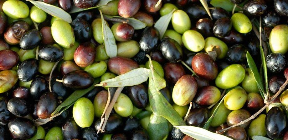 Olio d'oliva: ok Ue all'import tunisino senza dazi