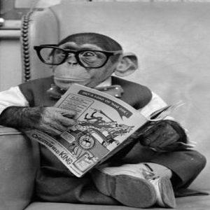 "Orangutan: dai diritti umani ai ""diritti di una persona non-umana"""