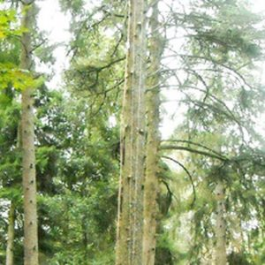 Quegli alberi contro la povertà
