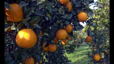 2013 anno da dimenticare per l'agricoltura. Dall'export speranze per un 2014 in ripresa