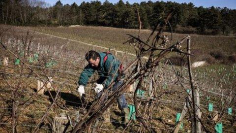 Cina, l'austerità frena l'import di vino australiano