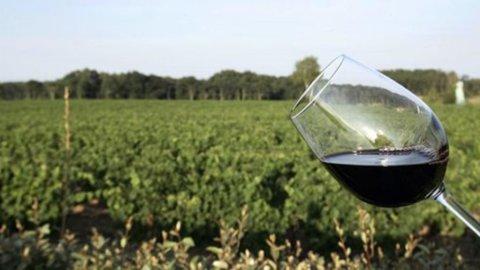 Vino: produzione uve +13% nel 2015