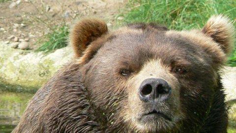 Rimbalzo o autunno con l'Orso a Piazza Affari? Dopo la batosta di ieri la Borsa prova a reagire