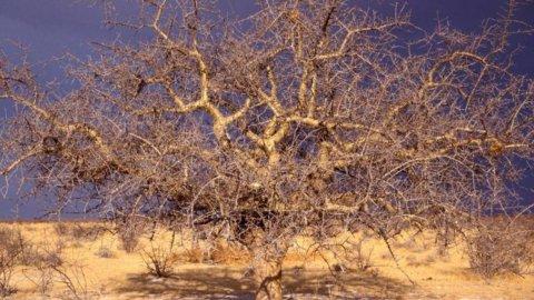 Angola: scommettiamo su trasporti e distribuzione di energia