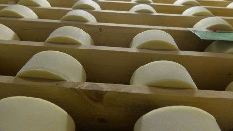 L'Ue vuole imporci il Grana senza latte