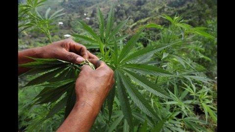 Cannabis libera, 218 parlamentari presentano proposta di legge
