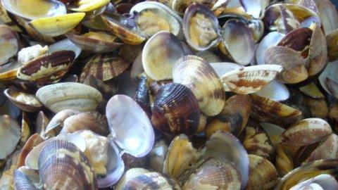 """Vongole """"mini"""": regolamento Ue mette in ginocchio i pescatori dell'Adriatico"""