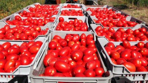 Coldiretti: allarme su pomodori dalla Cina