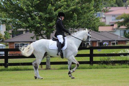Federazione sport equestri multata da Antitrust: ecco perché