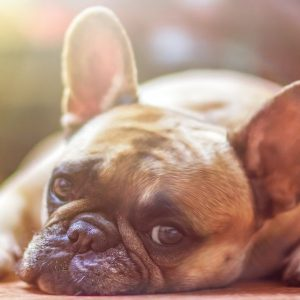 Ricetta veterinaria elettronica, scatta l'obbligo: ecco cosa cambia