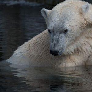 Borsa controcorrente: chi guadagna se arriva l'orso