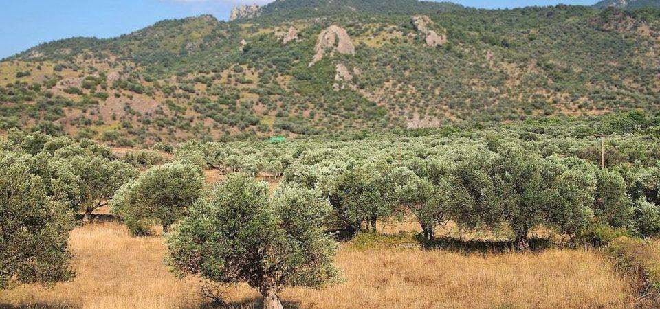 Tap, respinto ricorso Regione Puglia