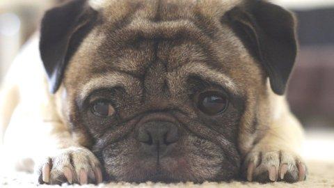 Cani, il condominio non può più vietarli