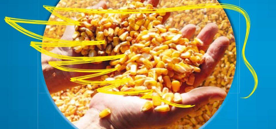 Monsanto: giudice vuole ridurre multa e Bayer vola