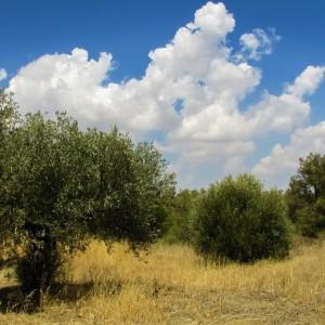 Agricoltura: terreni pubblici all'asta, mutui agevolati per gli under 41