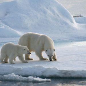 Sioi: quello che succede nell'Artico va oltre l'Artico