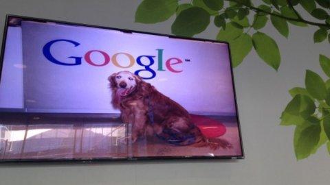 I cani della Silicon Valley: vorreste animali in ufficio?