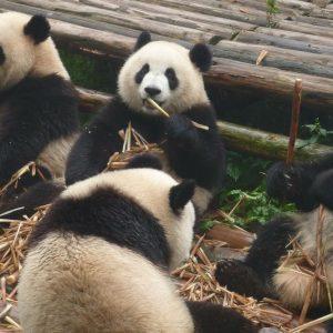 "Tokyo, effetto ""panda"" sulla Borsa"