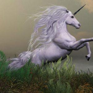 Bocconi: i fondi sovrani a caccia di unicorni