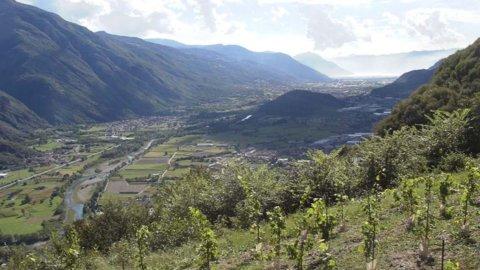 Agricola Vallecamonica: i fondali del Lago d'Iseo come cantina del suo vino