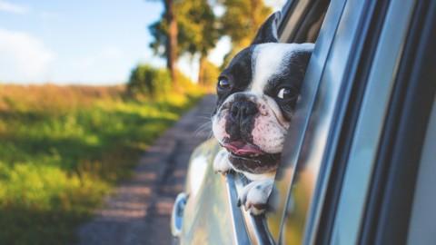 Assicurazione viaggio animali: arriva l'Rc auto per cani e gatti