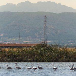 La Sardegna e l'ingegnere del sale: un luogo di benessere al posto di una palude