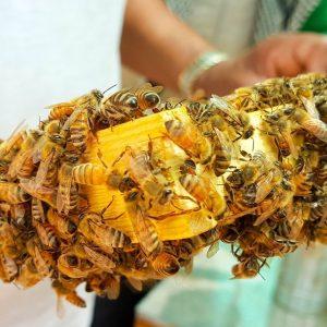 Miele: caldo record, dimezzata la produzione