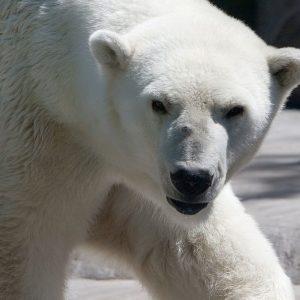In Borsa la paura richiama l'Orso ed è corsa ai beni rifugio